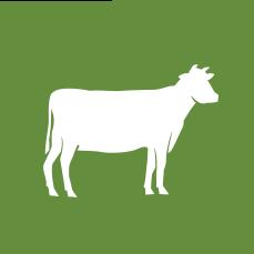 pasture-raised beef